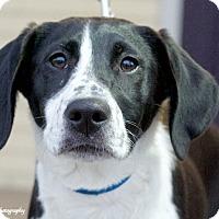 Adopt A Pet :: Holley - Marietta, GA