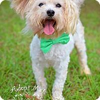 Adopt A Pet :: Ricoh - Fort Valley, GA