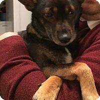 Adopt A Pet :: Petey - Marietta, GA
