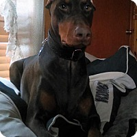 Adopt A Pet :: Mandy - Bristolville, OH