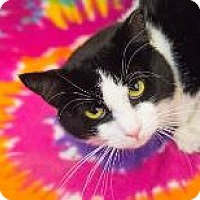 Adopt A Pet :: Missy - Decatur, GA