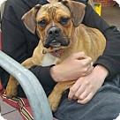 Adopt A Pet :: Gracie