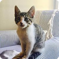 Adopt A Pet :: Marlow - Gainesville, FL