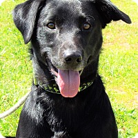 Adopt A Pet :: Shadow - Grants Pass, OR