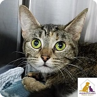 Adopt A Pet :: Sunshine - Eighty Four, PA
