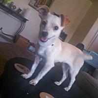 Adopt A Pet :: Rae - Visalia, CA