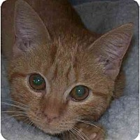 Adopt A Pet :: Lolly - Annapolis, MD
