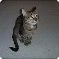 Adopt A Pet :: Montana - Hamburg, NY
