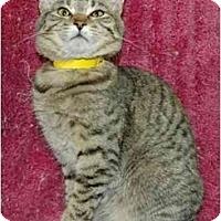 Adopt A Pet :: Lover - Pendleton, OR