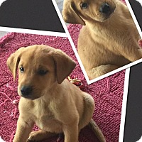 Adopt A Pet :: Rodrigo - Scottsdale, AZ