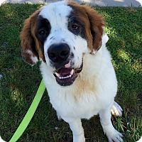 Adopt A Pet :: Cranberry - Mission Viejo, CA