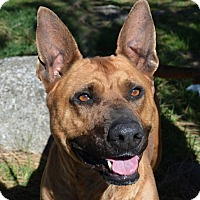German Shepherd Dog Mix Dog for adoption in Mountain Center, California - Delta