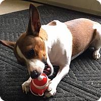 Adopt A Pet :: Vicky-Adoption Pending - Pinehurst, NC