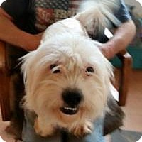 Adopt A Pet :: Angel - Greensboro, GA