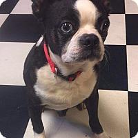 Adopt A Pet :: Smith - Jackson, TN