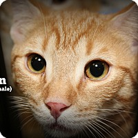 Adopt A Pet :: Gavin - Springfield, PA