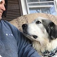 Adopt A Pet :: Elsa - Claremont, NC