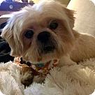 Adopt A Pet :: Joey (Has Application)