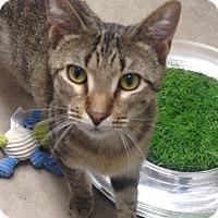 Adopt A Pet :: Joe - Houston, TX