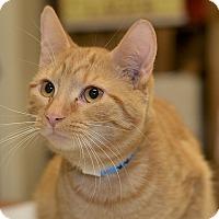 Adopt A Pet :: Angelo - Medina, OH