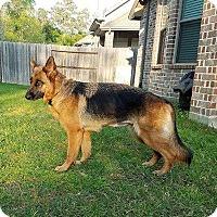 Adopt A Pet :: Arizona - Houston, TX