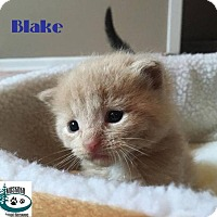 Adopt A Pet :: Blake - so darn cute! - Huntsville, ON