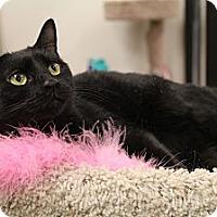 Adopt A Pet :: Sabrina - Chesapeake, VA