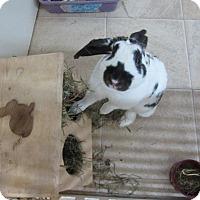 Adopt A Pet :: Ladybird - Newport, DE
