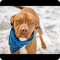 Adopt A Pet :: Nicholas - ADOPTED! - Zanesville, OH