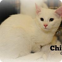 Adopt A Pet :: Chip - Springfield, PA