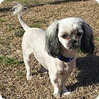 Adopt A Pet :: BARNEY - Glenburn, ME