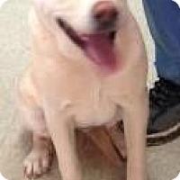 Adopt A Pet :: Daisy Mae - Clarkesville, GA