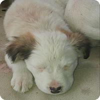 Adopt A Pet :: Bridgett - Girard, GA