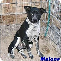 Adopt A Pet :: MALONE - Hawk Springs, WY