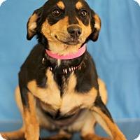 Adopt A Pet :: Glorette - Waldorf, MD