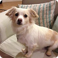 Adopt A Pet :: Fusion - Corona, CA