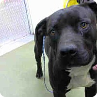 Adopt A Pet :: URGENT 3/29 @ DEVORE - San Bernardino, CA