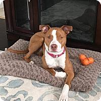 Adopt A Pet :: Kona - Groton, CT