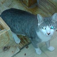 Adopt A Pet :: Little Bit - Whittier, CA