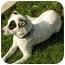 Photo 2 - Australian Cattle Dog Mix Dog for adoption in Milwaukee, Wisconsin - Abbey