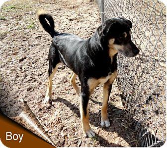German Shepherd Dog/Rottweiler Mix Dog for adoption in Ozark, Alabama - Boy