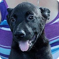 Adopt A Pet :: Harry - South Jersey, NJ
