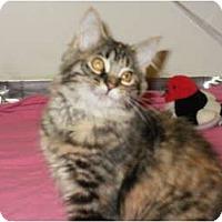Adopt A Pet :: Sugar Pea - Sterling Hgts, MI