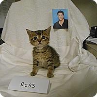 Adopt A Pet :: Ross - Maywood, NJ