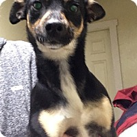 Adopt A Pet :: Roxy - Temecula, CA