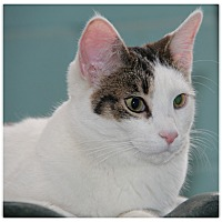 Adopt A Pet :: Patch - Forked River, NJ