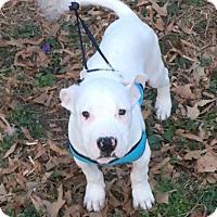 Adopt A Pet :: Hansel - Charlotte, NC