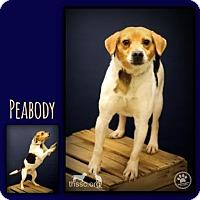 Adopt A Pet :: Peabody - Sullivan, IN
