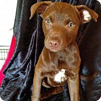 Adopt A Pet :: ARIEL - Ellaville, GA