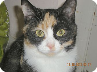 Calico Cat for adoption in Hood River, Oregon - Fiona